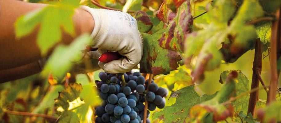 Vini dell'Azienda Agricola La Fusina - Alta Langa Docg